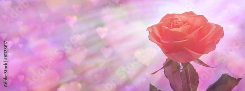 Single Red Rose Valentine Rose Banner