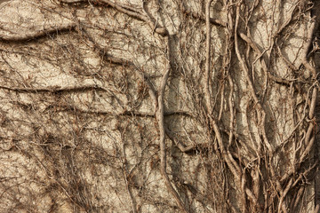 Tree climbing wall