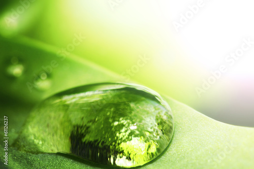 Water drop on leaf © yellowj