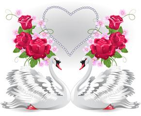 Elegant white swans