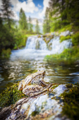 Frog and waterfalls