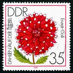 Postage stamp GDR 1979 Dahlia Enzett-Dolli, Flower