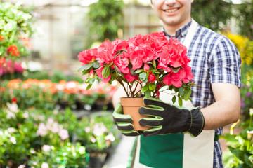 Greenhouse worker holding a flower pot