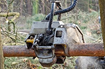 Holzvollernter zersägt Baumstamm