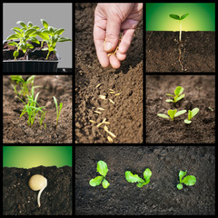 Spring planting seeds and seedlings into the soil