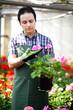 Gardener examining a flower