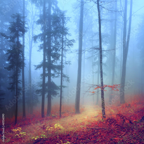 Autumn mysterious forest