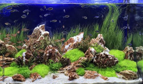 Fototapeta Planted Freshwater Aquarium