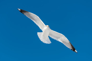 one white bird flies