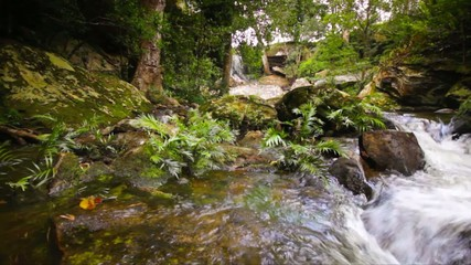 Dolly: Beautiful waterfall in tropical forest.