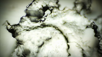 Ice crystals in a microscope