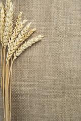 Espigas de trigo sobre un fondo de arpillera y espacio en blanco