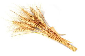 Espigas de trigo aisladas sobre fondo blanco