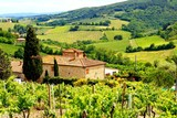 Fototapeta View through vineyards with stone house, Tuscany, Italy