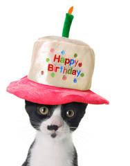 Happy Birthday kitten
