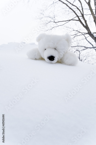 Stuffed Toy Polar Bear on Snow