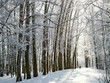 Pathway in sunny winter forest