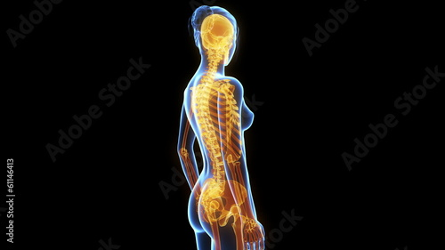 medical animation - women´s skeleton