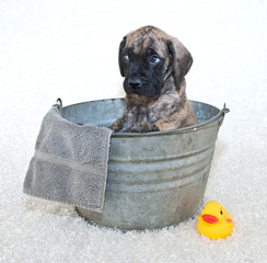 Please Not a Bath!