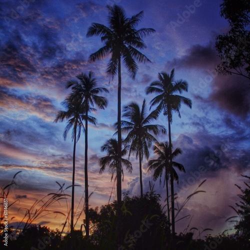 Leinwandbild Motiv palm trees on langkawi during sunset