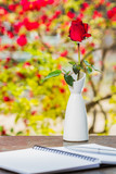 Red rose in vase