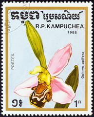 Ophrys apifera orhid (Kampuchea 1988)