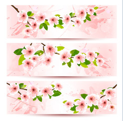 Three spring banners with blossoming sakura brunch with spring f