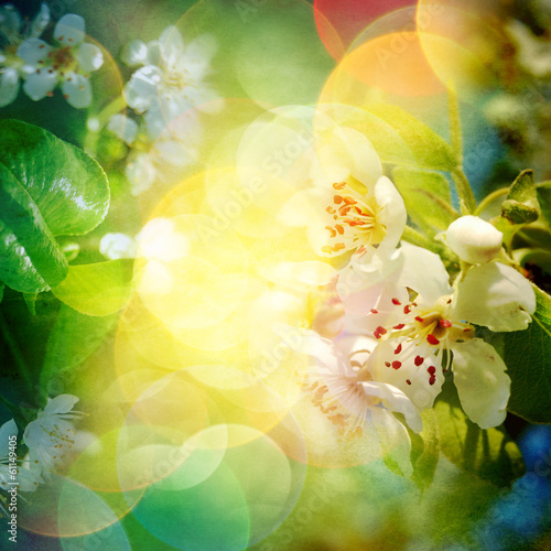 Spring blossom background