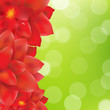 Red Flowers Border With Green Bokeh