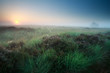 misty summer sunrise over marsh with heather