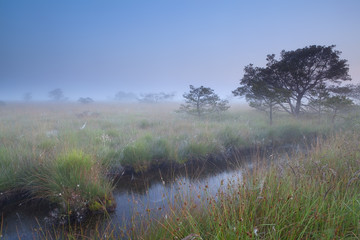 misty summer morning on swamp