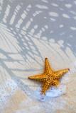 Fototapety Art Sea star on the beach background