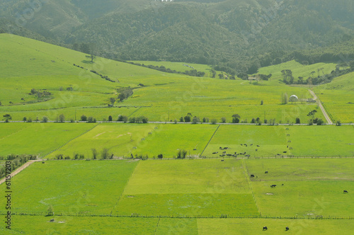 Fenced blocks of green farmland around Auckland, New Zealand