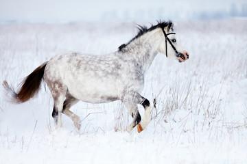 The gray mare runs in the field.