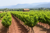 Vineyards in Var (Provence)