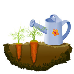 garden carrot and watering can