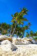 Exotic palm trees on the rocky coast of the Caribbean beach