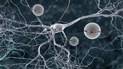 the mystery of brain cells life