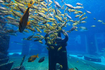 Beautiful underwater landscape with yellows fish