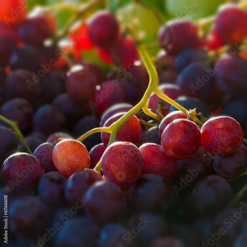 Red globe grapes macro close up square composition
