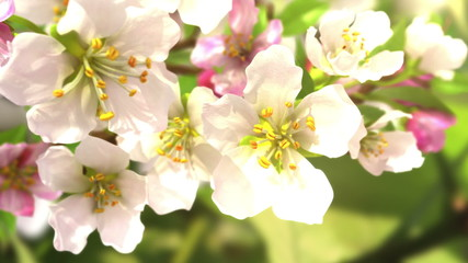 Soon the spring, beautiful 3d animation
