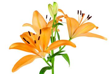 Orangefarbene Lilien