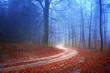Mysterious forest road