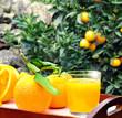 frisch gepresster Orangensaft in mediterranem Garten
