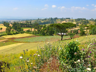 Ethiopian landscape nature. The village in the valley. Africa, E