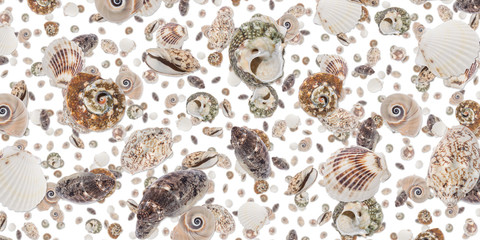 Shell background (on white)