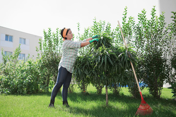 Happy housewife trimming small tree in her backyard.