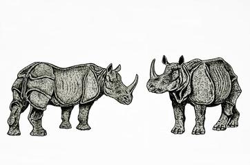 coppia di rinoceronti indiani