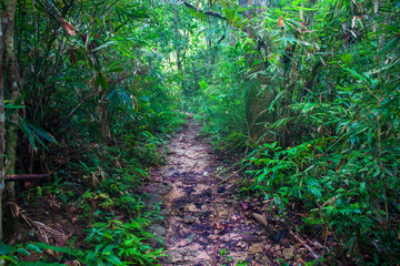 Jungle at Khao Yai National Park, Thailand