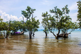 Mangroves and boats at Railay, Krabi province, Thailand
